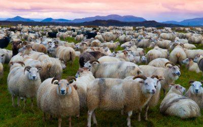 Wildlife of Iceland